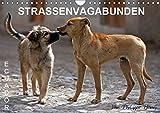 STRASSENVAGABUNDEN (Wandkalender 2019 DIN A4 quer): Straßenhunde in Ecuador (Monatskalender, 14 Seiten ) (CALVENDO Orte)