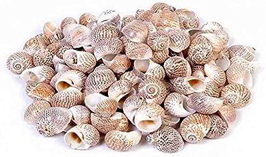 Maalavya Shankh Shells 250Grms.