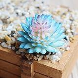 oobest 2Kunstleder Succulents unpotted Vinyl künstlichen Sukkulente Galanthus Kaktus Pflanzen Pflanzen, PVC, Blau, 9