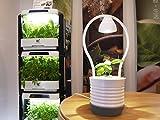 Light Pot - living, verde, luce decorativa. Set di piante con illuminazione/luce, luce per piante, decorazione, idroponica, vaso per fiori, giardino per interni - regalo ideale