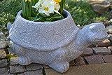 Maison en France Schildkröte groß- Zum Bepflanzen, Länge 45 cm, Sehr Stabil -für Haus und Garten-witterungsbeständig