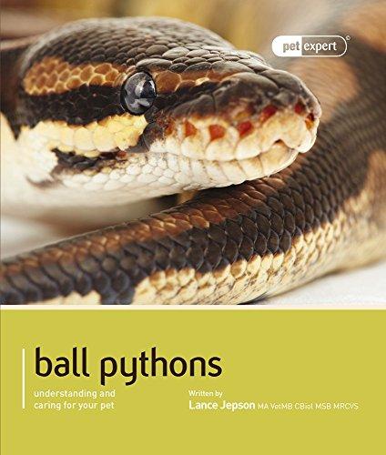 Ball Python (Royal Python) (Pet Expert) -