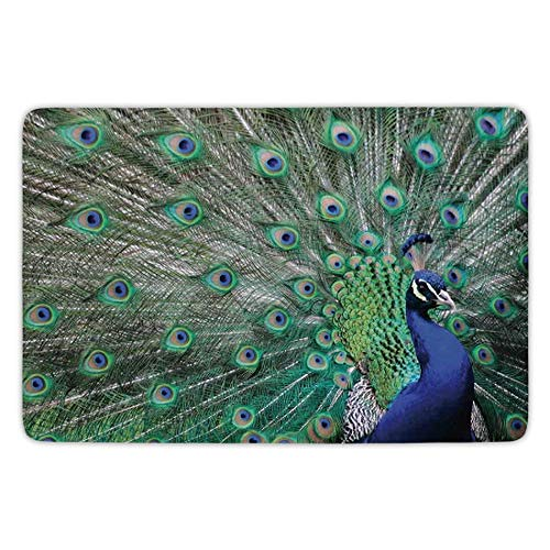 Bathroom Bath Rug Kitchen Floor Mat Carpet,Peacock,Peacock Displaying Elongated Majestic Feathers Open Wings Picture,Navy Blue Green Light Brown,Flannel Microfiber Non-Slip Soft Absorbent (Peacock Feathers Displaying)