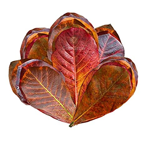 SUNGROW MINI CATAPPA LEAVES: 50 pieces of tropical Indian almond tree leaves for tannin-rich water
