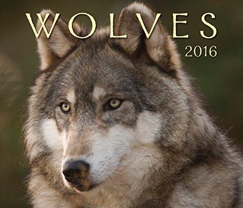 Wolves 2016 Calendar (Calendars 2016)