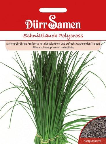 Dürr Samen 0159 Schnittlauch Polycross (Schnittlauchsamen) [MHD 12/2019]