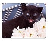luxlady Mousepads für Kätzchen schwarz blau Hintergrundbild mit Blume Bild 20357567Individuelle Art Desktop Laptop Gaming Mauspad