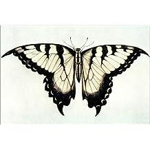 Forex 120 x 80 cm: Swallow-tail Butterfly di John White / Granger Collection