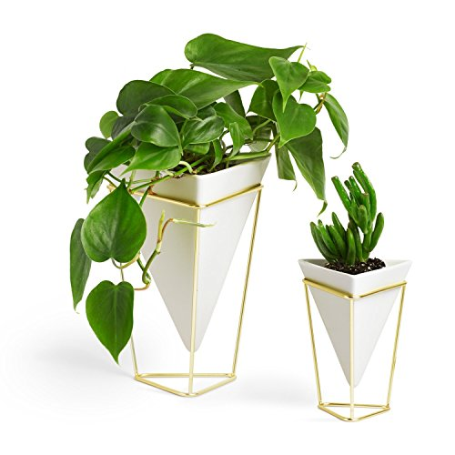 Umbra Trigg Desktop Planter Vase & Geometric Container - Great For Succulent Plants, Air Plant, Mini Cactus, Faux Plants and More, White Ceramic/Brass (Set of 2)