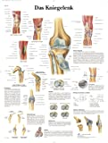 3B Scientific Lehrtafel - Das Kniegelenk