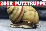 Teich Sumpfdeckelschnecke, 20 st.. + 1 NH TOXEX BALL - ( Faden ) Algen und Laubfresser / Gesundheitspoilzei im Gartenteich!