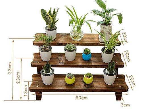 plante achat vente de plante pas cher. Black Bedroom Furniture Sets. Home Design Ideas