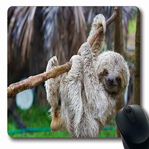 Luancrop Mauspads für Computer, die Brown Puerto Sloths-Rettungszentrum-Costa Rica-Säugetier-San-Tier-Grün DREI Toed Viejo-Baum-rutschfeste längliche Spiel-Mausunterlage bewegen