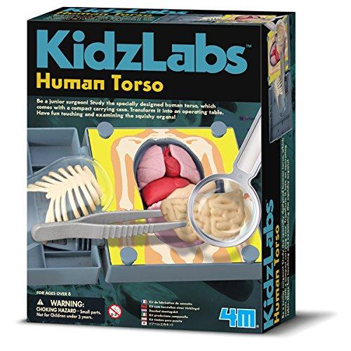 Human Torso (Die Menschlichen Organe)