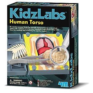 4M 68484 Kidz Labs Anatomía Torso Humana Kit de Ciencias