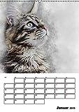 Maine Coon Katzen (Wandkalender 2019 DIN A2 hoch): Eine der größten Katzen der Welt: Maine-Coon (Planer, 14 Seiten ) (CALVENDO Tiere)