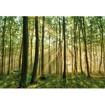 giant poster xxl forest morning 764 161cm x 115cm 1 sheet mini photo wall mural trees. Black Bedroom Furniture Sets. Home Design Ideas