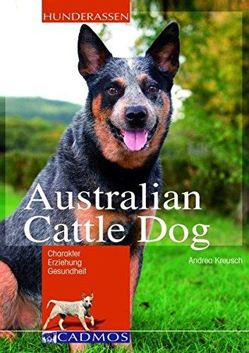 australian cattle dog  2019  charakter