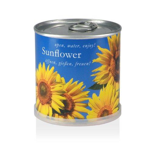 Blumen in der Dose - Sonnenblume