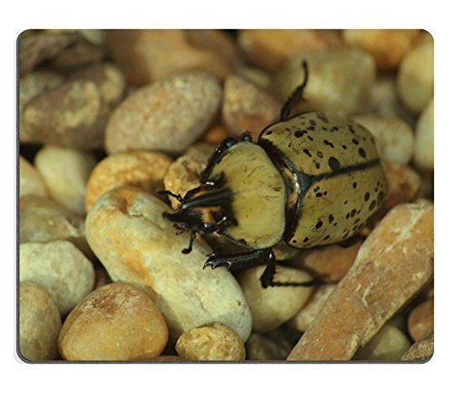beetle-potato-colorado-bugs-insects-qzone-customized-made-to-order-cloth-with-neoprene-rubber-s-raze