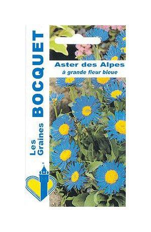 Les Graines Bocquet - Graines De Aster Des Alpes Grande Fleur Bleue - Graines Potagères À Semer - Sachet De 0.3Grammes