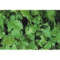Portal Cool 1kg: Mostaza blanca - abono verde - Sinapsis Alba - 1 kg -