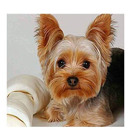 DAIMEND Voller Diamant Stickerei Tier Yorkshire Terrier Dog 5D Diamant Malerei Kreuzstich Diamant Mosaik Handarbeiten Handwerk Weihnachten,40x50cm
