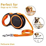 Retractable Leashes Review and Comparison