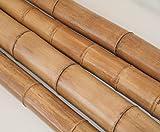 Bambusrohr natur gelbbraun 150cm Durch. 8 bis 10cm, Moso unbehandelt getrocknet - Bambus Rohr Bambus Latten farbige Bambusrohre Bamboo Bambus Halbschale Bambusstangen --> großes Sortiment an Bambusrohre und Rohre aus Bambus Bambus-Rohre