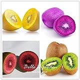 100pcs Wahl mit 5 Farben Berry Seeds Fruchtsamen Actinidia Kens Köstlicher Frucht Bonsai Samen Hausgarten Pflanze DIY Mix