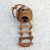 OMGO Jouet Perroquet Nid d'Oiseau en Coque de Noix de Coco Cages Perroquet Original Cachette Naturelle avec Échelle