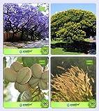 GEOPONICS Sementi conifera e Semi Sacri Jacaranda, Peltophorum, Sterculia guttata, Denanath s combinato per HomSEEDing & & & s semi per seme semi (4 per pacchetto)