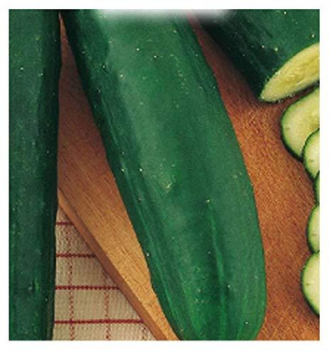 150 aprox – Gurkensamen entlang grünem Ortolani Cucumis Sativus in der ursprünglichen Verpackung hergestellt in Italien – grüne Gurken lang