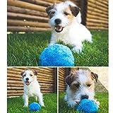 Zooarts Funny Pet Elektrische Spielzeug Ball–Hält Ihren Hund Aktiv und Gesund