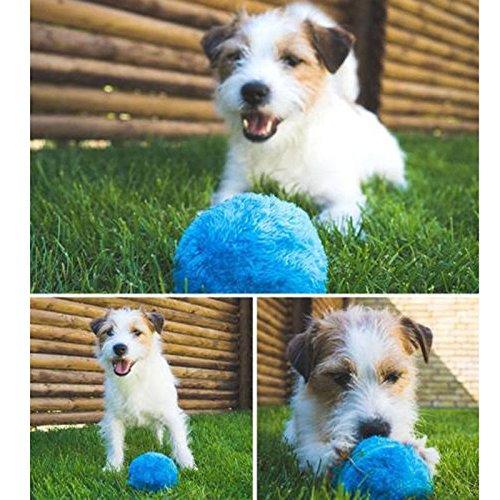 Zooarts Funny Pet Elektrische Spielzeug Ball-Hält Ihren Hund Aktiv und Gesund -