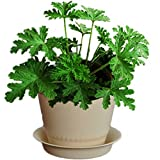 Mosquito Repellent Plants Review and Comparison