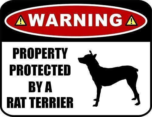 Promini Warnschild mit Aufschrift Protected by A Rat Terrier, laminiertes Hundeschild, dekoratives Aluminium, Metallschild mit Löchern, Aluminum, Multi, 15x23cm/ 6x9 in (Zwei Unsichtbaren Zaun, Hunde)