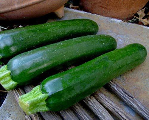 portal cool 220 black beauty zucchini (zucchino estivo) semi non ogm facile da coltivare 1 oncia