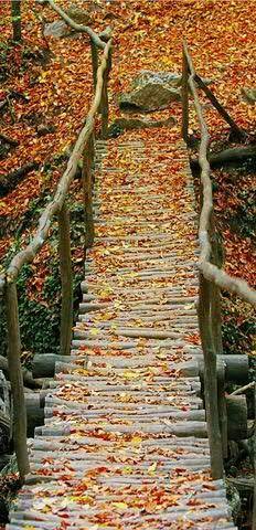 Hochwertiger Textilbanner Herbst/Herbstlich - Große Auswahl - 180cmx90cm - Einseitig Bedruckt - Schaufenster Deko - Wanddeko/Textilbild/Herbstdeko (Holzbrücke)