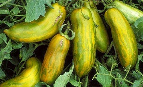 PLAT FIRM GRAINES DE GERMINATION: 50 - graines: WOW !!!!Tomate Saucisse Verte - Vert avec des rayures jaunes !!!Livraison gratuite!!!!