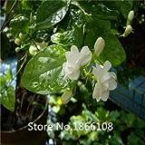 50 / BAG Cape Jasmin Samen, (Gardenia jasminoides) Duft Exotische Strauch - offene Bestäubung seltene schöne Bonsai fließen