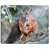 Liili alfombrilla de ratón alfombrilla de ratón de goma natural, diseño de ardilla roja imagen ID 21593954