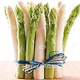 Pinkdose GGG AAA confezione originale 100 semi/pacchetto, semi Piccolo Bonsai Asparagi Bonsai verde Asparago Seeds: Bianco