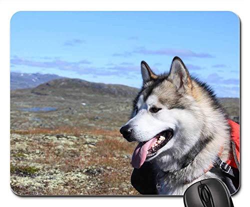Yanteng Alfombrillas de ratón para Juegos, tapete para el ratón, Alaskan Malamute Climbed Sled Dog
