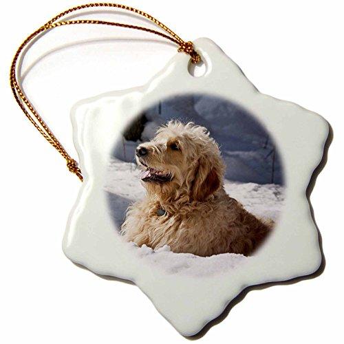 3dRose, Goldendoodle, im snow-us32zmu0065-zandria muench beraldo cm, Schneeflocken-Design, Mehrfarbig
