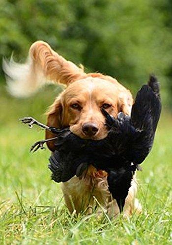 Descargar Libro Entrenamiento Canino de Trever  Stears