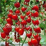 Pinkdose Bonsai 100 Stück Rainbow Zwerg Tomate, seltene Tomate, süße Bonsai Bio köstliches Gemüse & amp; Obstpflanze für den Garten: 4