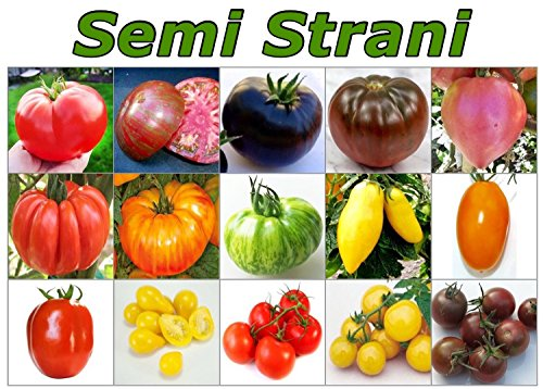 150-semi-pomodoro-in-15-varieta-rare-e-ricche-di-sostante-nutritive-collezione-1-piccola-guida-alla-
