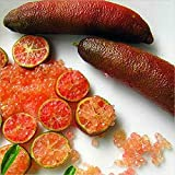 Shopmeeko 20 teile/beutel Ice Pink Finger Obst Kalk pflanzen Seltene Granatapfelpflanzen Bonsai Diy Pflanze Für Hausgarten Pflanzen Blume Baum pflanzen 2: Hellgrün