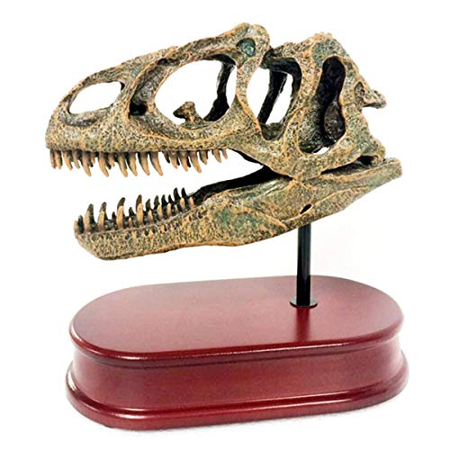 FXQ Modelo de cráneo de Dinosaurio de 6.5 Pulgadas - Dinosaurio fósil jurásico Antiguo Allosaurus Cabeza de cráneo Grande - para investigación de Animales arqueológicos, Juguete Educativo científico
